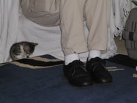 Thomas finding a place to hide behind Dad's feet!
